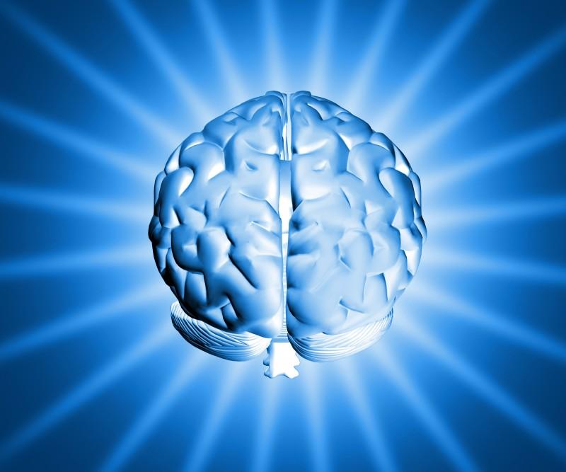 Shinny-brain